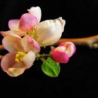 """""""The Burst of Spring,"""" Art Exhibit by Gene Mark"""