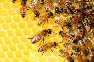 Honey Bees, Diverse Ecosystems & Golf! A Winni...