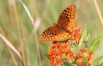 """The Art of Pollinators"""