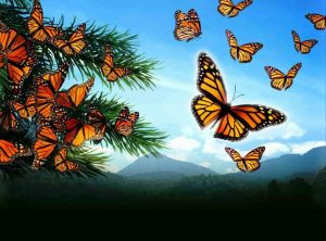 The Festival of the  Monarch Butterfly: A Latino C...