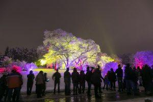 Illumination: Tree Lights at the Morton Arboretum
