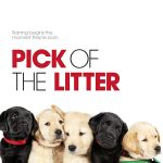 After Hours Presents Pick of the Litter