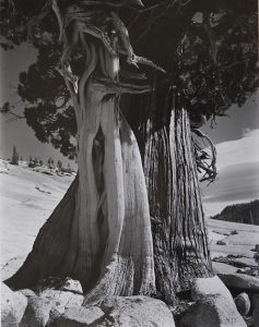 Black-and-White Nature Photography: In the Footsteps of Edward Weston