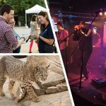 Common Area Maintenance: Cosley Zoo Benefit Concert
