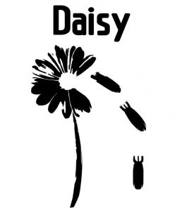 Daisy CANCELED