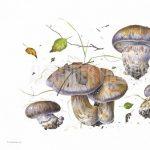 Visiting Artist Sasha Viazmensky: Mushrooms in Watercolor