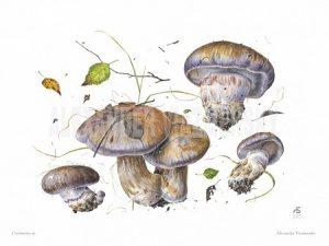 Visiting Artist Sasha Viazmensky: Mushrooms in Wat...