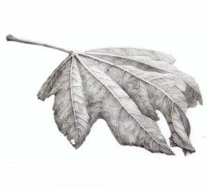 Autumn Textures in Graphite