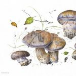 Visiting Artist Sasha Viazmensky: Mushrooms in Watercolor