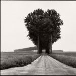 Nature Photography: In the Footsteps of Henri Cartier-Bresson