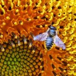 CALL FOR ART FOR 'POLLINATORS IN ACTION: FLOWERI...