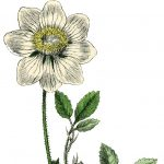 Easy Botanical Drawing: Four-Part Class