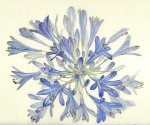 Spring Graphite/Watercolor