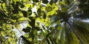 Radiant Rainforests (K-3rd)