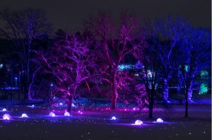 Illumination: Tree Lights at The Morton Arboretu...