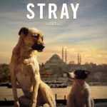 After Hours Film Society Presents Stray
