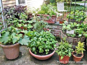 Library Presents Gardening Program